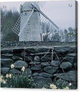 Windmill And Daffodils  Acrylic Print