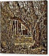 Window Of Roots Acrylic Print
