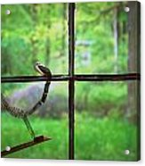 Window Pain Acrylic Print