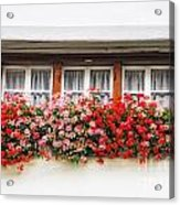 Windows With Red Flowers Acrylic Print