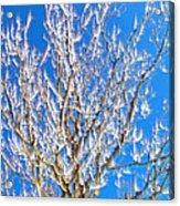 Winds Upon The Branchs II Acrylic Print