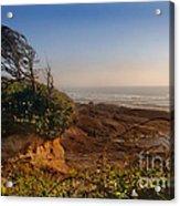 Windswept Coast Acrylic Print