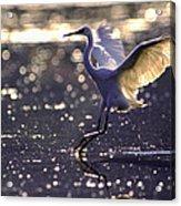 Wingdance Acrylic Print