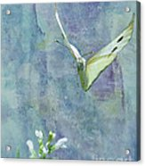 Winging It Acrylic Print by Betty LaRue