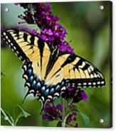 Wings Of Hope Acrylic Print