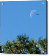 Wings Over Moon Acrylic Print