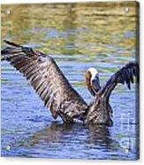 Wings Up Acrylic Print