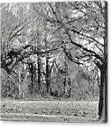 Winter At The Edge Of The Woods Acrylic Print