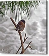 Winter Bird Acrylic Print