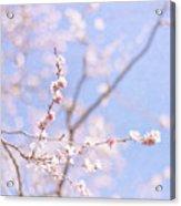 Winter Blossom Acrylic Print by Jill Ferry