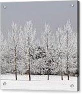 Winter, Calgary, Alberta, Canada Acrylic Print