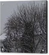 Winter Cold Branches Acrylic Print