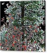 Winter Color Acrylic Print