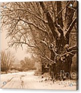 Winter Country Road Acrylic Print