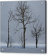 Winter Elegance Too Acrylic Print