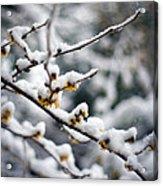Winter Fleurs Acrylic Print