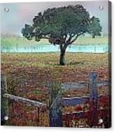 Winter Fog Acrylic Print