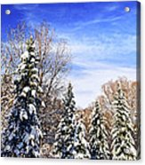 Winter Forest Under Snow Acrylic Print by Elena Elisseeva