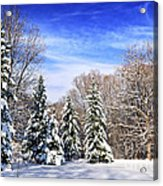 Winter Forest With Snow Acrylic Print