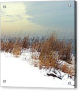Winter Grasses In Snow Acrylic Print