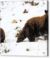 Winter Guide Acrylic Print