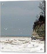 Winter Gulls Acrylic Print