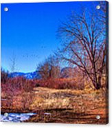 Winter In South Platte Park Acrylic Print