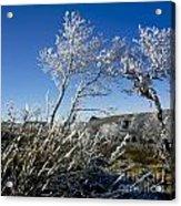 Winter Landscape.  Auvergne. France Acrylic Print by Bernard Jaubert