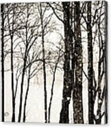 Winter Landscape On Snowy Day Acrylic Print