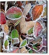 Winter Leaves Acrylic Print by Linda Pope