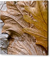 Autumn Leaves Of Gold Acrylic Print