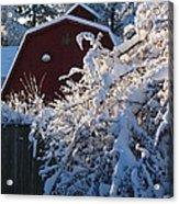Winter Look Acrylic Print