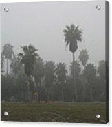 Winter Palms Acrylic Print