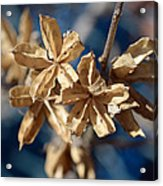 Winter Remainder Acrylic Print