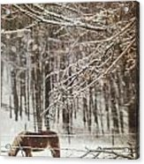 Winter Scene With Horse Grazing In Wooded Pasture Acrylic Print