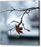 Winter Solo Acrylic Print