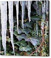 Winter Still Acrylic Print