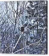Winter Storm Alert Acrylic Print