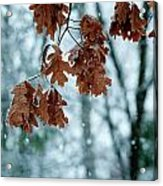 Winter Takes Hold Acrylic Print