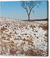 Winter Tree Nachusa Grasslands Acrylic Print