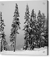 Winter Trees On Mount Washington - Bw Acrylic Print