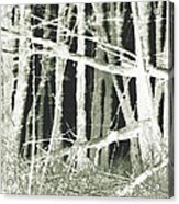 Winter Trees With Chalk Acrylic Print