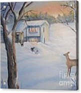 Winter Visitor Acrylic Print