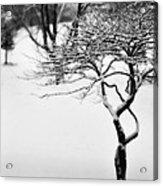 Winter Whisper Acrylic Print