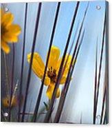 Winter Wildflowers Acrylic Print