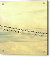 Wires With Many Birds On Them Acrylic Print