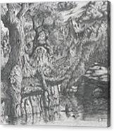 Wise Old Tree Acrylic Print