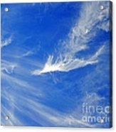 Wispy White Acrylic Print