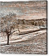 Wizened Tree Acrylic Print