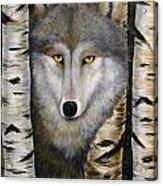 Wolf Beauty Acrylic Print